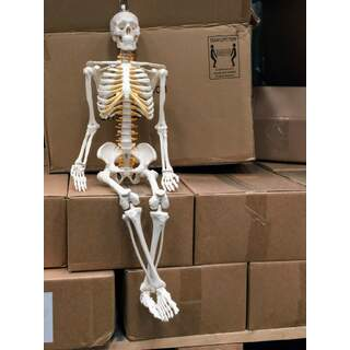 Flexible mini skeleton 85 cm