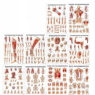 Affischset 50x70 cm with muscle groups of ten posters