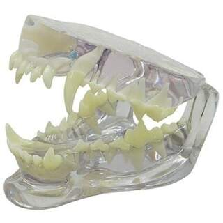 Transparent dog's jaw with teeth