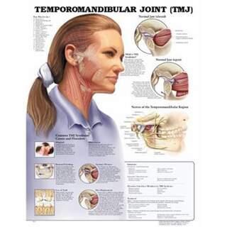 Temporomandibular joint disease (TMJ) laminated English