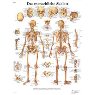 Skeleton poster pure latin 51x67 cm