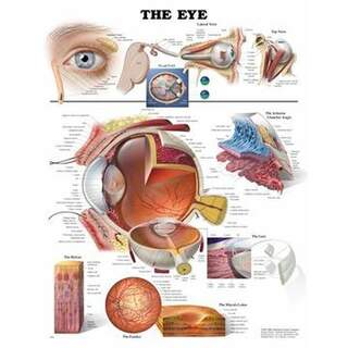 Eye poster English 51x66 cm