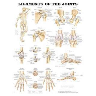 Poster - Trail ligaments laminated poster 51x66 cm