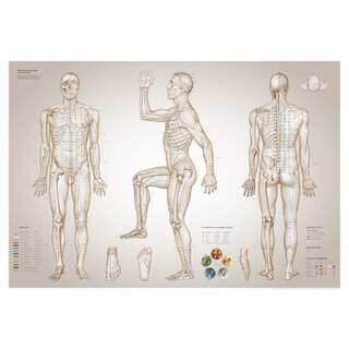 Plate Acupuncture - The Essential Charts of Acupuncture