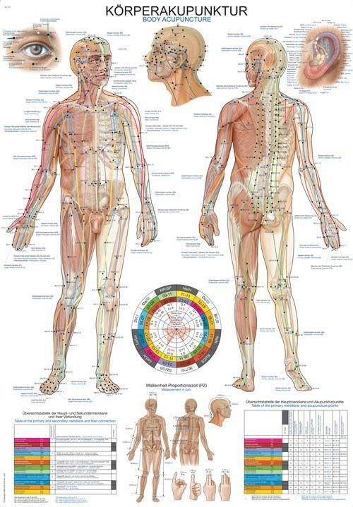 massage anatomy book review