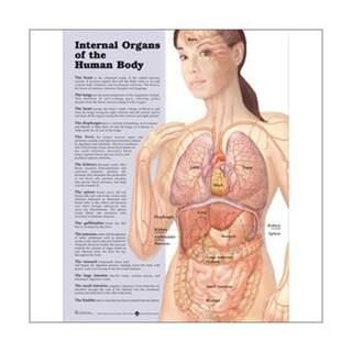 Inner body laminated poster