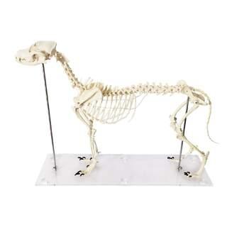 Dog Bone Plastic