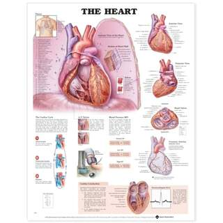 Heart laminated planch English