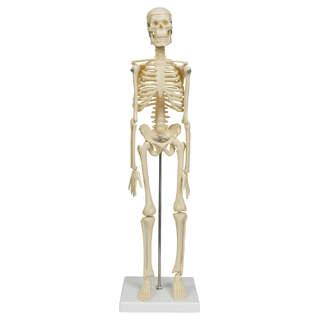 Micro skeleton  45 cm