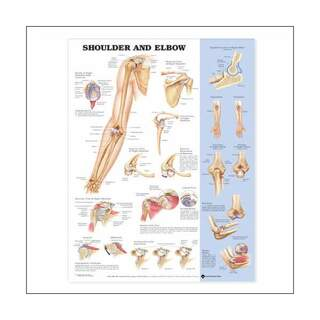 Shoulder & Elbow laminated poster 51x66 cm