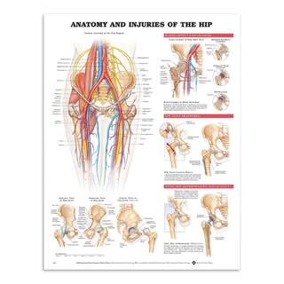 Anatomy & Injury in the hip joint in English