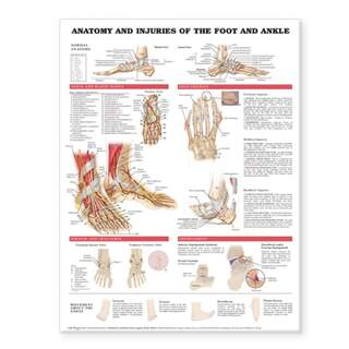 Anatomy & injuries to the foot & ankle laminated poster English