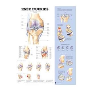 Knee injuries poster English