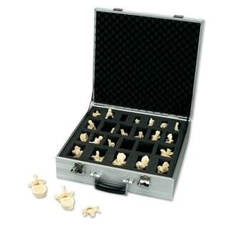 BONE LIKE set of 24 vertebrae