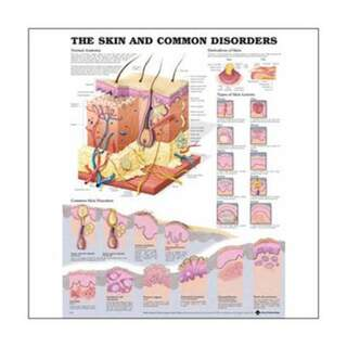Poster - Skin and Common Diseases English