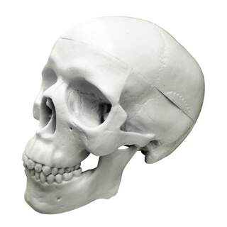 Cheap Mini skull model in three parts