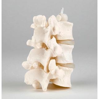 Lumbar, 3 flexible composite