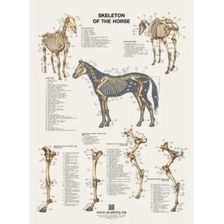 The horse's skeleton poster 60x80 cm