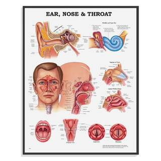 Ear nose neck - paper poster / poster 51x66 cm