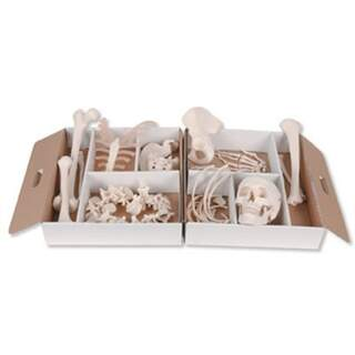 Skeleton bone set for many purposes. Comes in a space-sized carton with handles