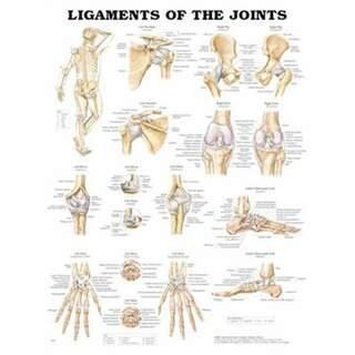 Laminated poster with leader and ligament English